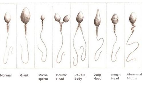 Hur Smakar Sperma